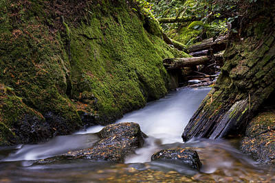 Photograph - Cliff Gilker Park by Windy Corduroy