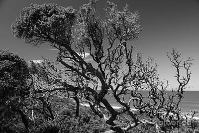 Photograph - Cliff Tree by Amanda Holmes Tzafrir