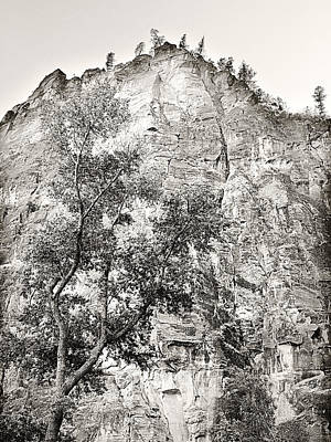Black White Photograph - Cliff Trees 2 by Marilyn Hunt