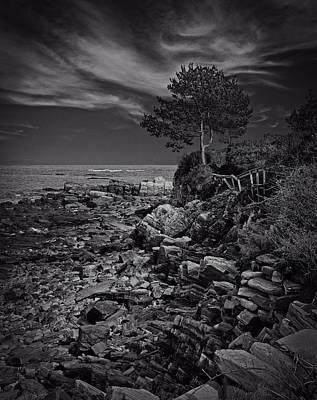 Cliff Walk - Winslow's Tree Original by Michael Berry