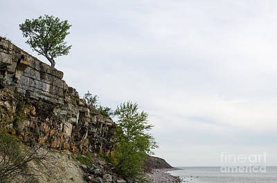 Photograph - Cliffs And Lone Tree At Costline by Kennerth and Birgitta Kullman