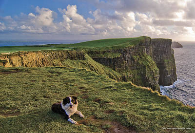 Sheepdog Photograph - Cliffs Of Moher  by Sean Tomkins for Ireland of the Welcomes