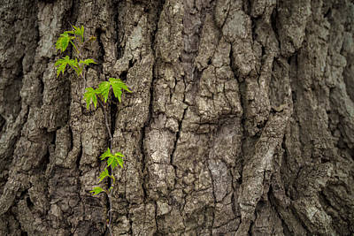Photograph - Climb by Ryan Heffron