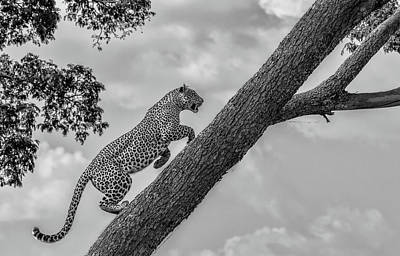 Leopard Photograph - Climb Up by Henry Zhao