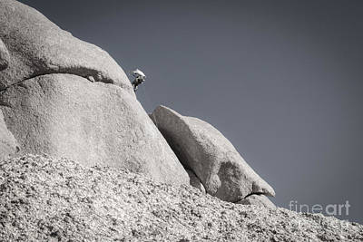 Photograph - Climber On Witch Rock by Marianne Jensen