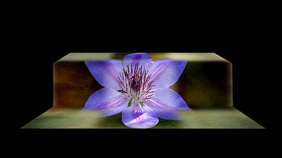 Purchase Online Photograph - Climbing Clematis by Steven Michael
