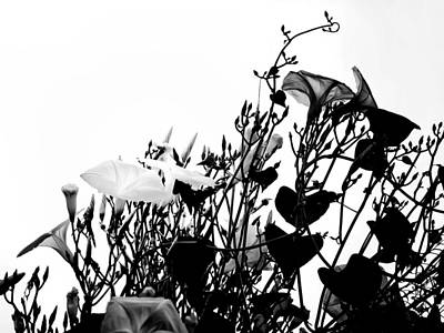Flowers White Vine Photograph - Climbing Forever by Camille Lopez
