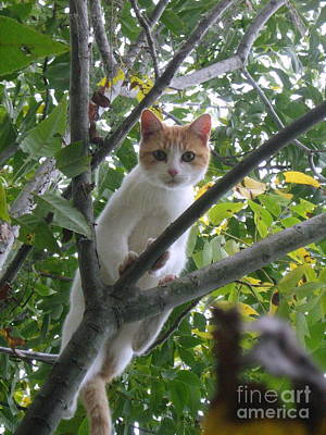 Art Print featuring the photograph Climbing Kitty by Wendy Coulson