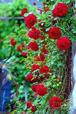 Climbing Red Roses Art Print by C Lythgo