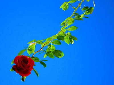 Quiet Digital Art - Climbing Rose by Andreas Thust