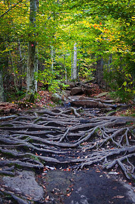 Photograph - Climbing The Rocks And Roots Of Bald Mountain by David Patterson