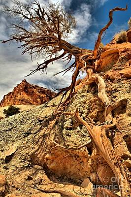 Photograph - Clinging To Life At Capitol Reef by Adam Jewell