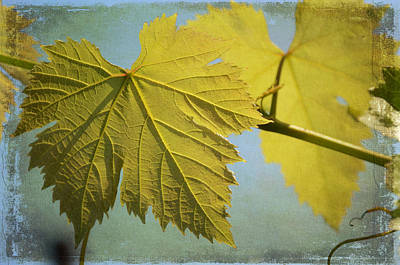 Clinging To The Vine Art Print