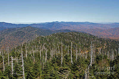 Photograph - Clingmans Dome Autumn by Gene Berkenbile