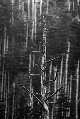 Photograph - Clingman's Dome Skeletons by Andy Crawford