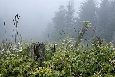 Photograph - Clingman's Fog I by Carol Erikson