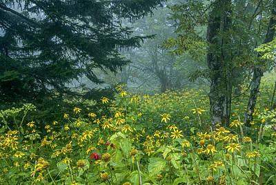 Photograph - Clingman's Fog IIi by Carol Erikson