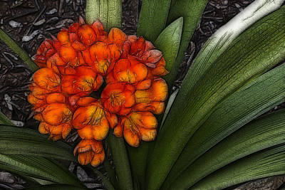 Art Print featuring the digital art Clivia by Photographic Art by Russel Ray Photos