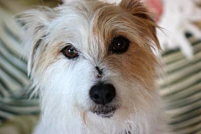 Terrier Digital Art - Cloe by Bonita Hensley