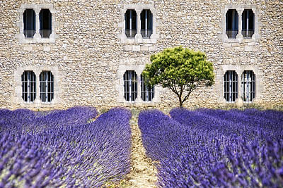 Cloister-lavender Print by Joachim G Pinkawa