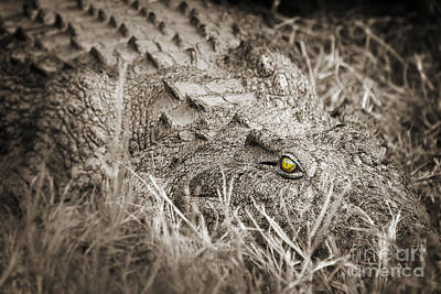 Crocodile Photograph - Close Crocodile  by Delphimages Photo Creations