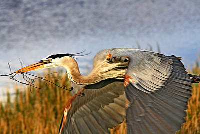 Photograph - Close Flyby by Ira Runyan