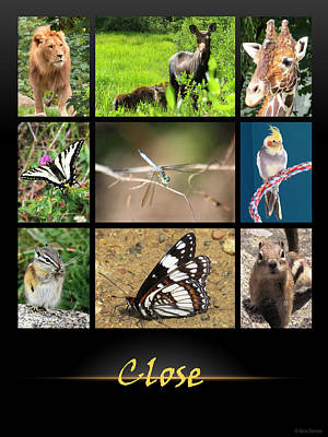 Photograph - Close Poster Animals by Nina Donner