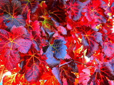 Photograph - Close Red Grape Vine Leaves by Jeff Lowe