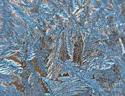 Photograph - Close To Frost by Cheryl Baxter