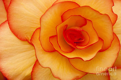 Begonias Photograph - Close To Saturn by Anne Gilbert