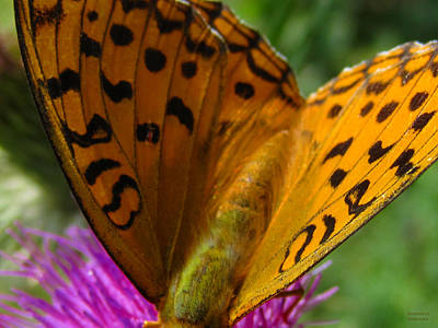 Photograph - Close Up Butterfly by Alexandros Daskalakis