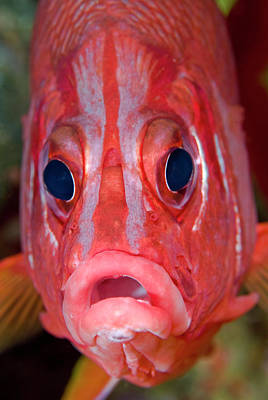 Undersea Photograph - Close-up Frontal View Of Colorful by Jaynes Gallery