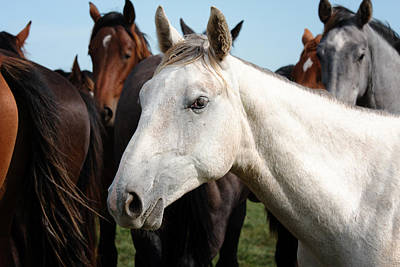 Close-up Herd Of Horses. Art Print