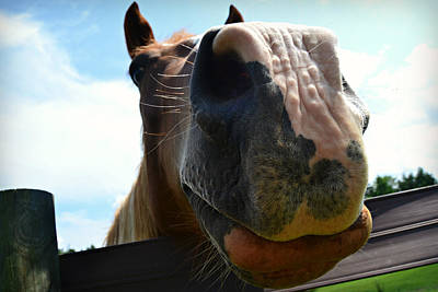Photograph - Close Up Horse by Amber Summerow