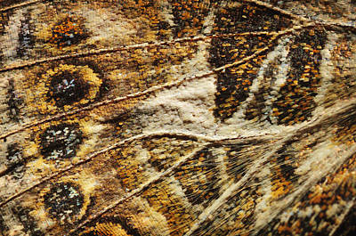 Close Up Of A Butterfly Wing St. Albert Art Print by Corey Hochachka