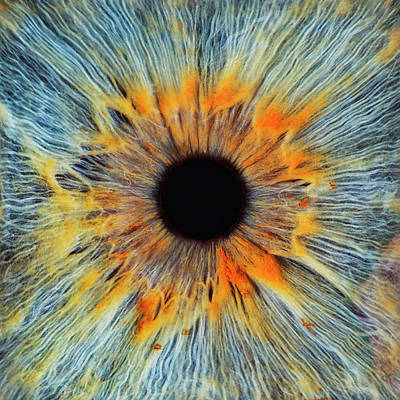 Blue Photograph - Close-up Of A Human Eye, Pupil And Iris by Dimitri Otis
