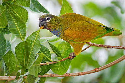 Wetlands Photograph - Close-up Of A Scaly-headed Parrot by Panoramic Images