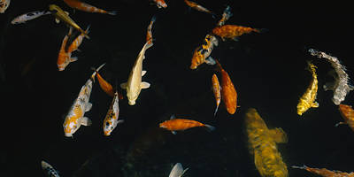 Close-up Of A School Of Fish In An Art Print by Panoramic Images