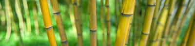 Bamboo Photograph - Close-up Of Bamboo, California, Usa by Panoramic Images