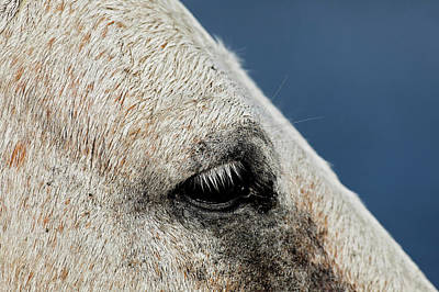 Grace Photograph - Close-up Of Camargue Horse, France by Adam Jones