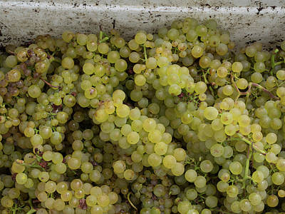 Hawkes Bay Photograph - Close-up Of Chardonnay Grapes, Church by Panoramic Images