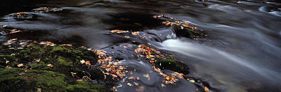Fallen Leaf Photograph - Close-up Of Dart River And Fallen by Panoramic Images