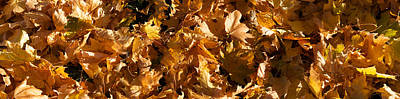 Fallen Leaf Photograph - Close-up Of Dry Leaves by Panoramic Images