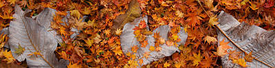 Fallen Leaf Photograph - Close-up Of Fallen Maple Leaves by Panoramic Images