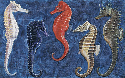 Marine Life Drawing - Close-up Of Five Seahorses Side By Side  by English School