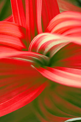 Space Photographs Of The Universe - Close up of Flower  by Charles Don Thompson
