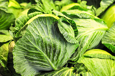 Photograph - Close-up Of Fresh Cabbage In The Vegetable Garden by Alex Grichenko