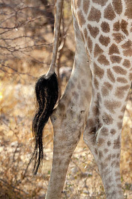 Part Of Photograph - Close-up Of Giraffe's Tail And Hind by Jaynes Gallery
