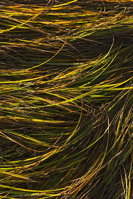 Close Up Of Grass Along Womens Bay Art Print by Kevin Smith