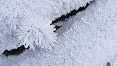 Close Up Of Hoar Frost Along The North Art Print by Kevin Smith